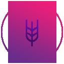 icon2h